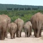 kudde olifanten met tekst